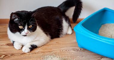 Kedi Kumu ile İlgili Merak Ettiğiniz Her Şey