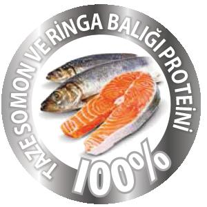 Taze Somon ve Ringa Balığı